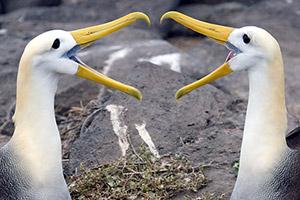 Galapagos Islands Photo Tour