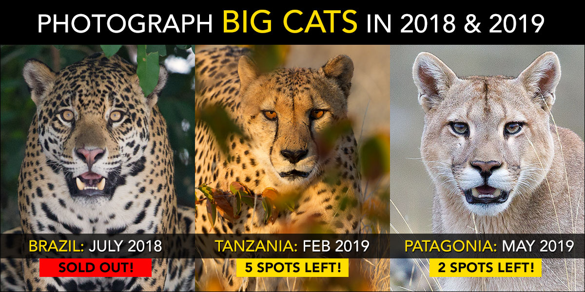 Big Cat Photo Tours