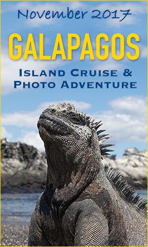 Galapagos 2017 Photo Tour