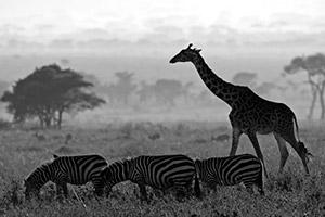 Tanzania Photo Tours