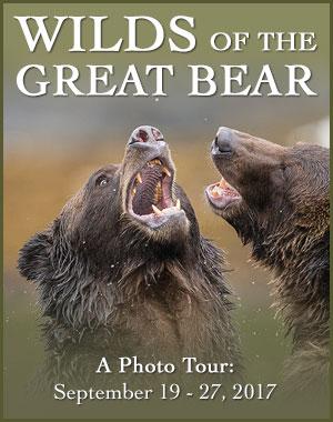 Great Bear Rainforest Photo Tour