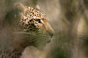 South Africa Photo Tours