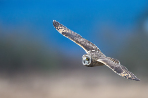 Pacific Northwest Owl Photo Tours and Workshops