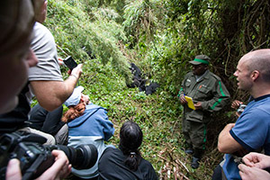 tourists watching mountain gorillas