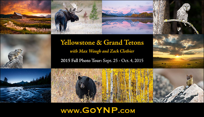 Yellowstone and Grand Teton Fall Photo Tour