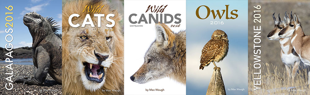 2016 Nature and Wildlife Calendars by Max Waugh