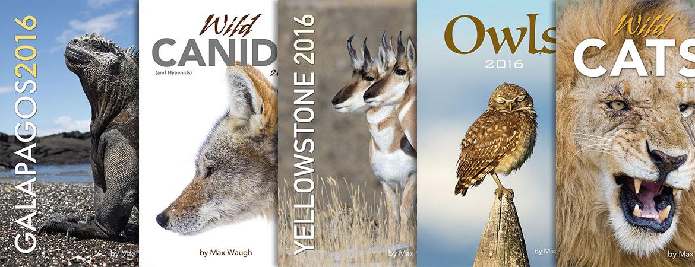 2016 calendars on sale