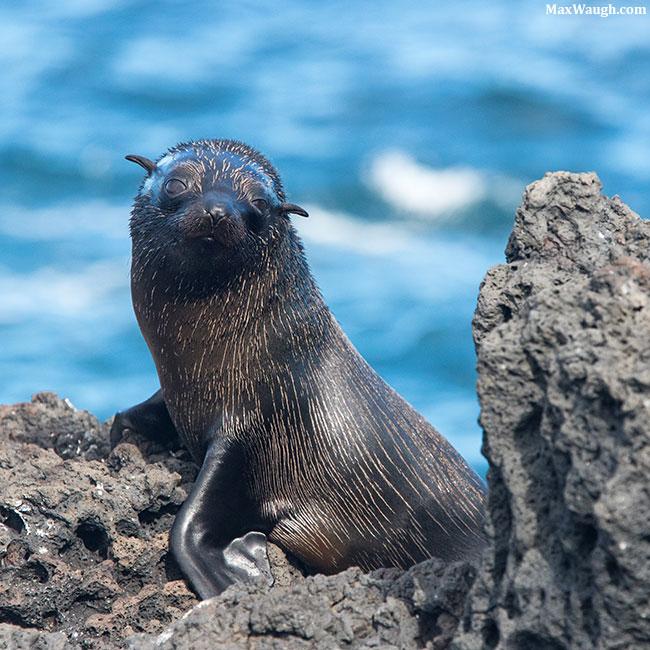 2016 Galapagos calendar