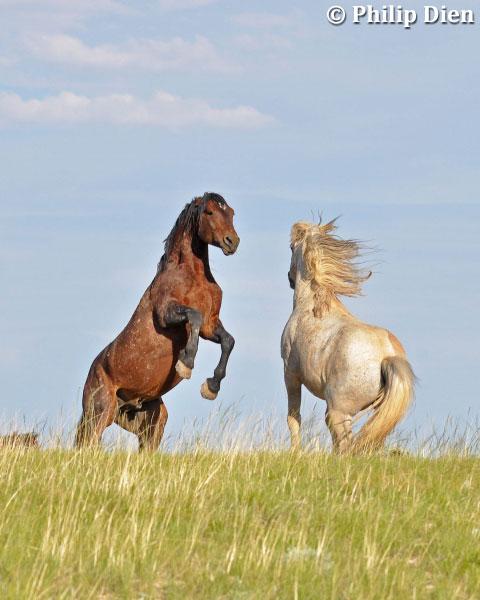 Wild Horses by Phil Dien