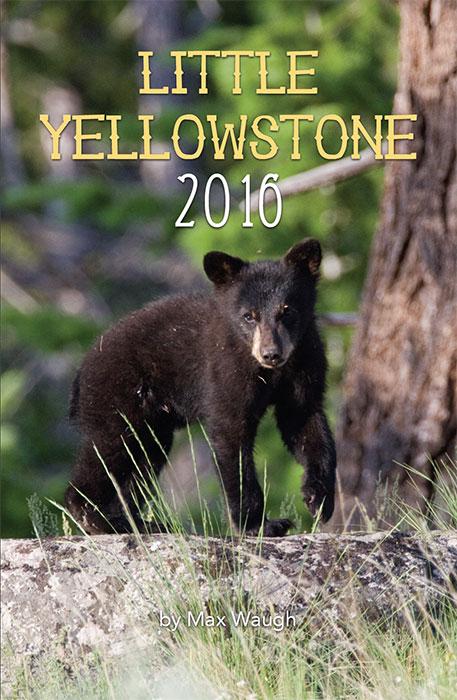 2016 Little Yellowstone calendar
