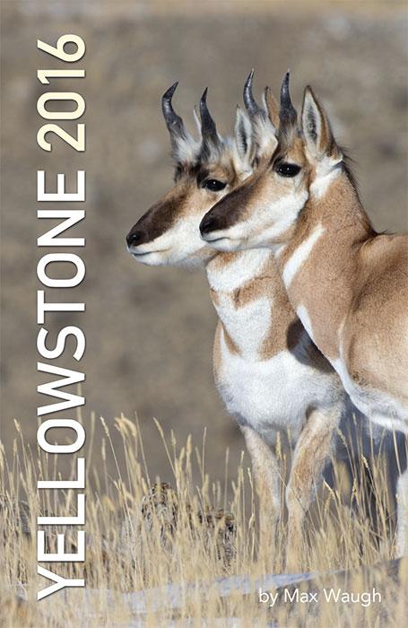 2016 Yellowstone calendar