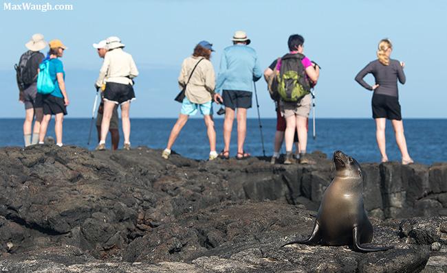 Sea lion and tourists