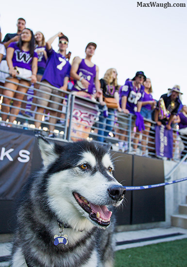 Dubs the mascot and Husky student take in some football on a sunny day at Husky Stadium.