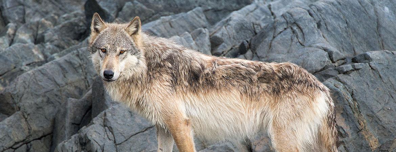 Great Bear Rainforest Photos