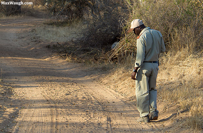 Following animal tracks