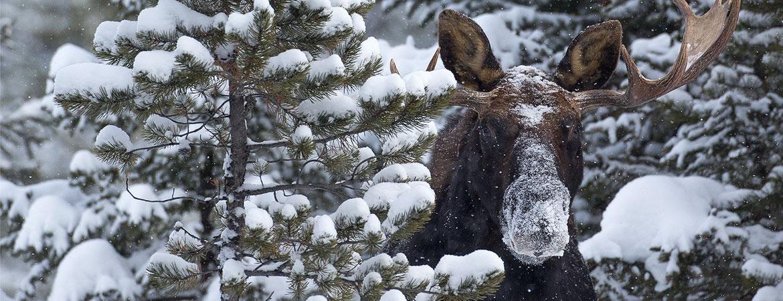 Yellowstone Winter 2012-13 Photos