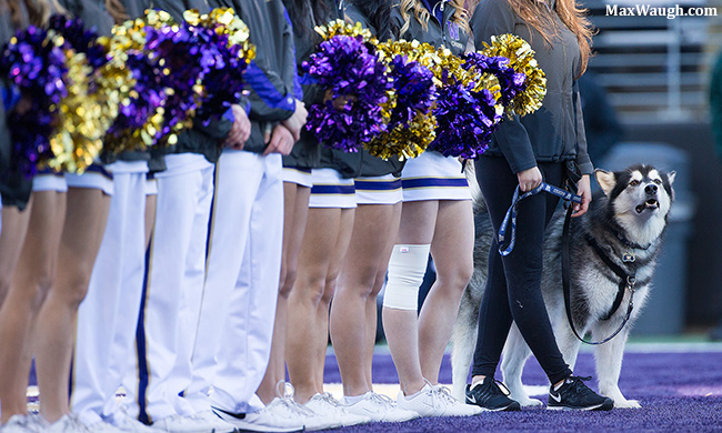 Dubs peeks out beyond the legs of the Husky cheer squad.