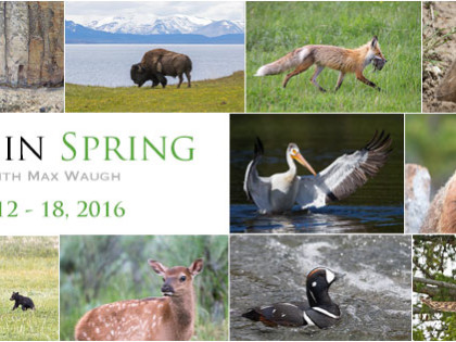 2016 Yellowstone Spring Photo Tours