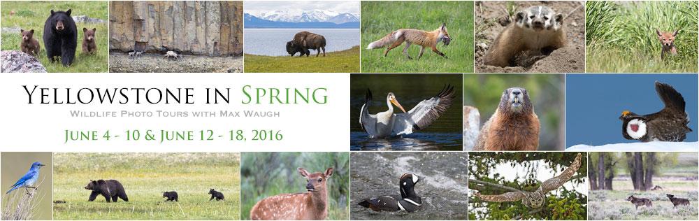 Yellowstone Spring 2016 Tours