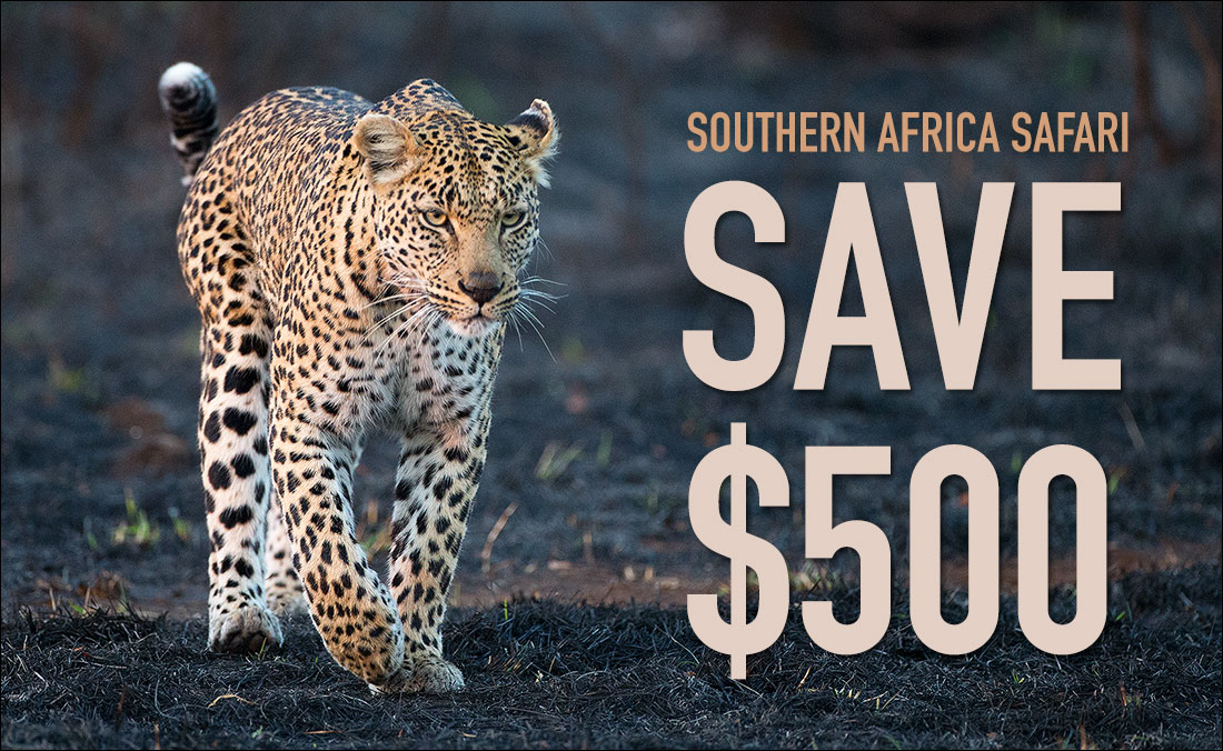 Save $500 on Southern Africa Safari