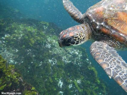 Photos Added + Video: Galapagos 2015