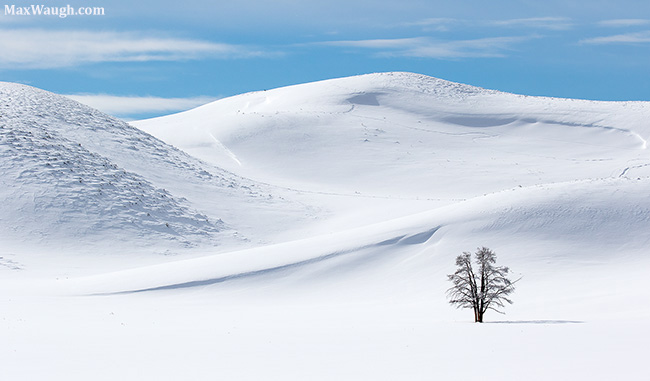Tom Murphy Tree