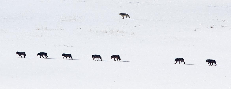 Yellowstone Winter 2016 Photos