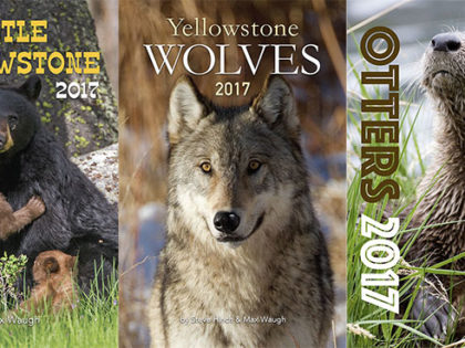 2017 Nature and Wildlife Calendars are Now on Sale