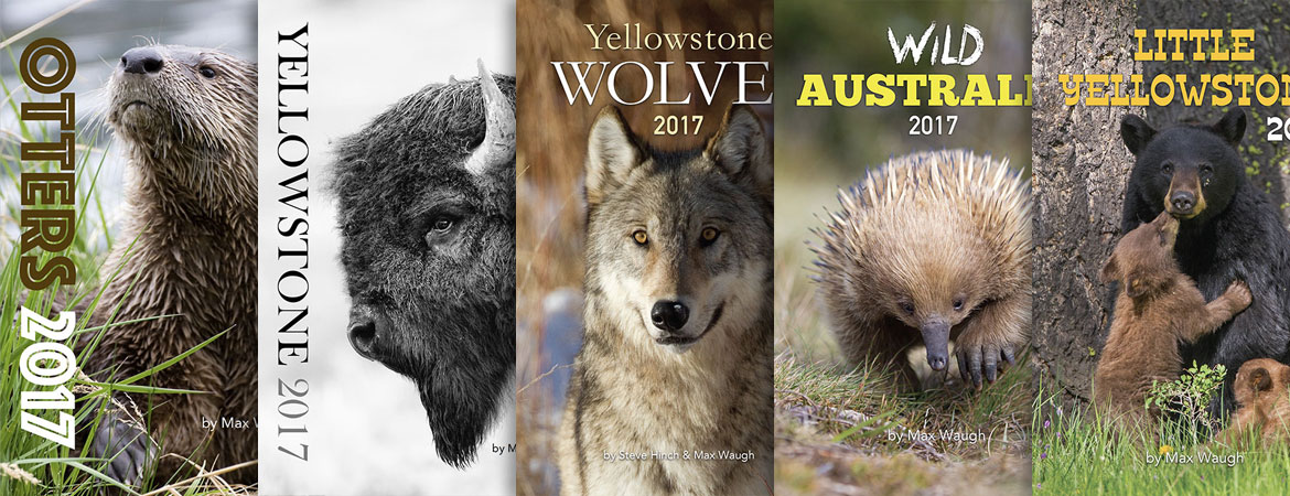 2017 nature and wildlife calendars
