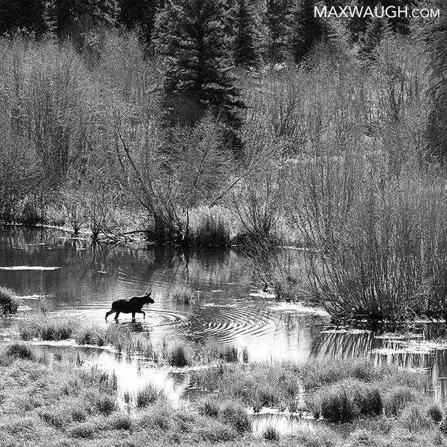 2017 Yellowstone calendar