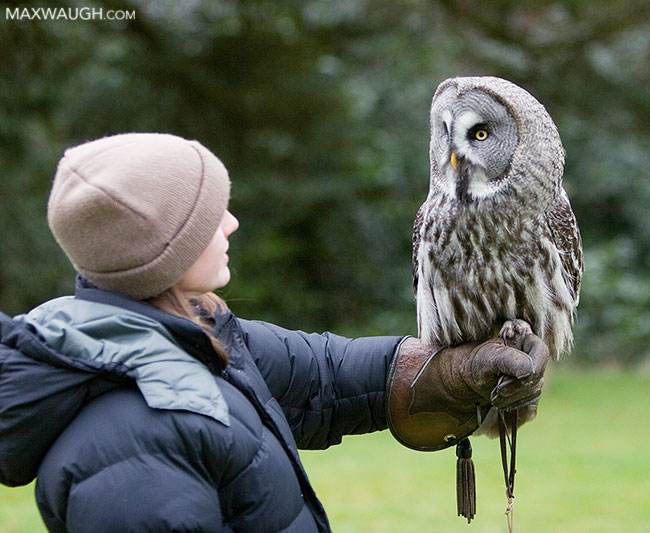 Jenn with a great gray owl
