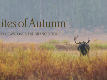 Video Retrospective: Rites of Autumn (Fall in Yellowstone and the Tetons)