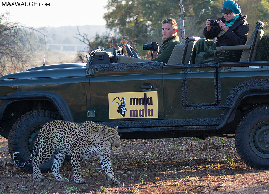 Leopard and photographers