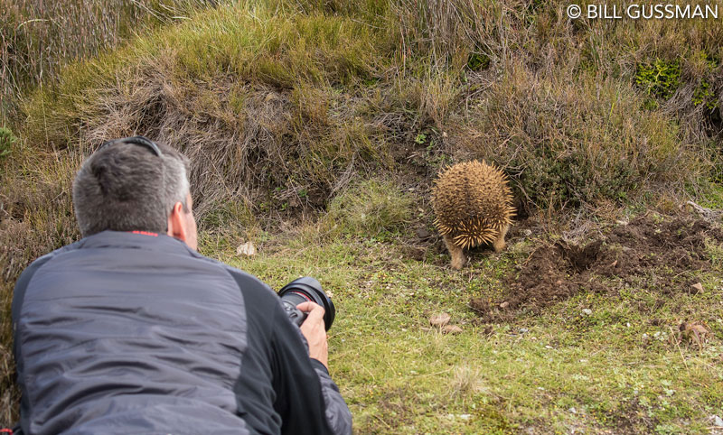 Max photographing echidna