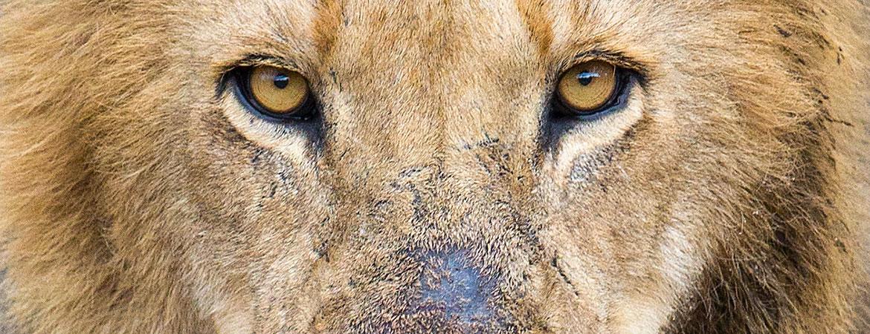 South Africa 2016 wildlife photos