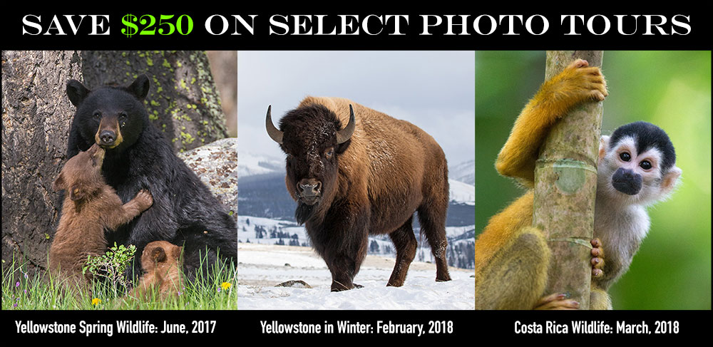 Save $250 on Photo Tours