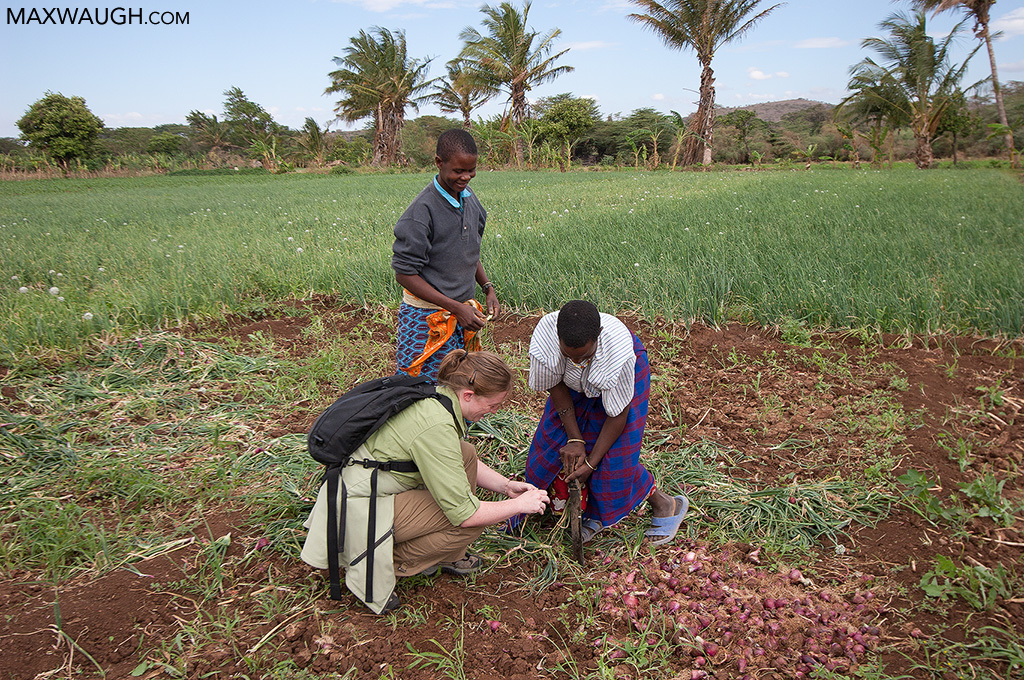 Onion farm, Tanzania