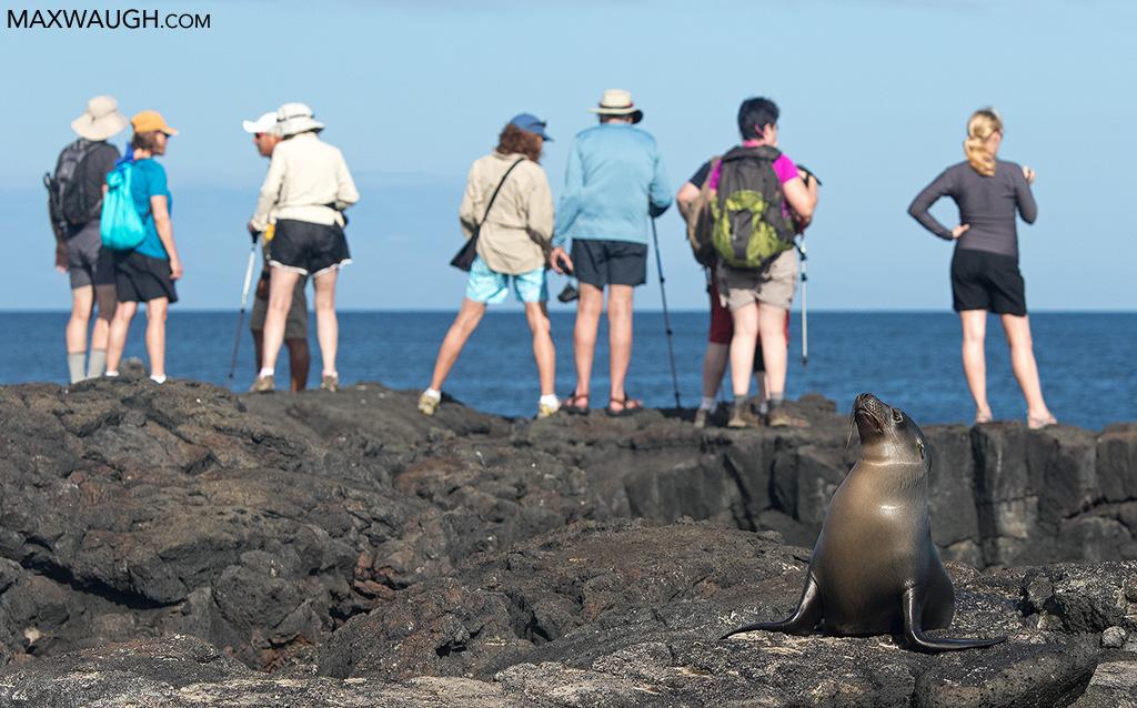 Galapagos sea lion and tourists