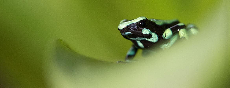 Costa Rica 2016 Wildlife Photos