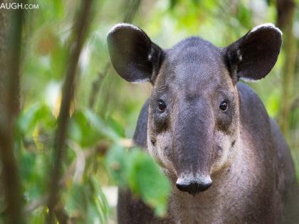 New Photos: Costa Rica 2016 Wildlife
