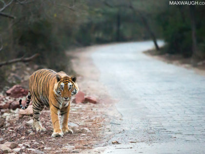 Photos Added: India 2015 Wildlife