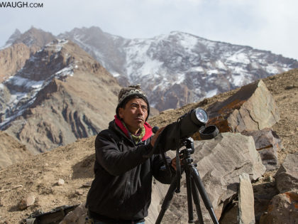 Photographing Wild Snow Leopards