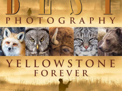 Honors in the 2016 Yellowstone Forever Competition