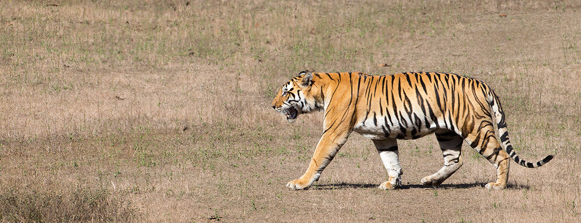 India 2015 wildlife photos