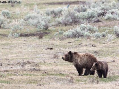 Yellowstone April 2017 Trip Report: Days 3 & 4