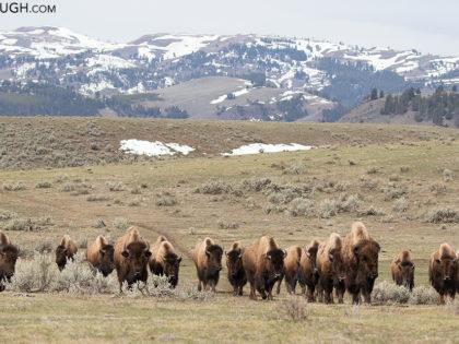Yellowstone April 2017 Trip Report: Days 1 & 2