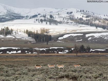 Yellowstone April 2017 Trip Report: Days 5 – 7