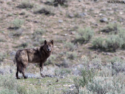Yellowstone April 2017 Trip Report: Days 8 – 10