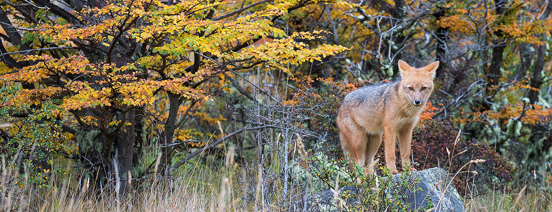 Patagonia 2017 Wildlife & Scenery
