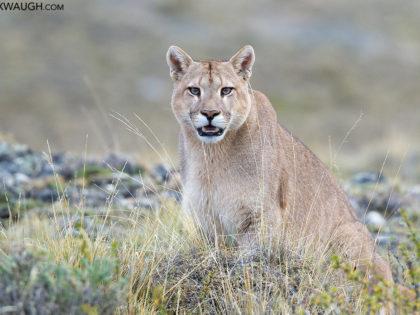 New Photos: Patagonia 2017 Pumas